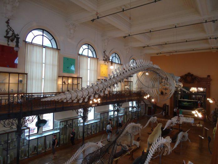 Museo Oceanográfico Monaco